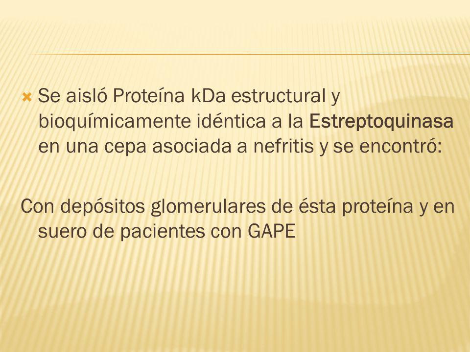 Se aisló Proteína kDa estructural y bioquímicamente idéntica a la Estreptoquinasa en una cepa asociada a nefritis y se encontró: