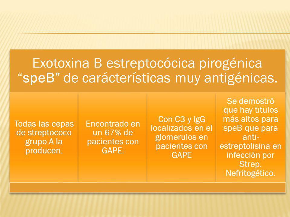 Exotoxina B estreptocócica pirogénica speB de carácterísticas muy antigénicas.