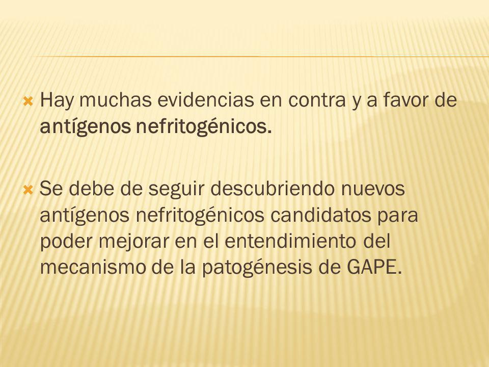 Hay muchas evidencias en contra y a favor de antígenos nefritogénicos.
