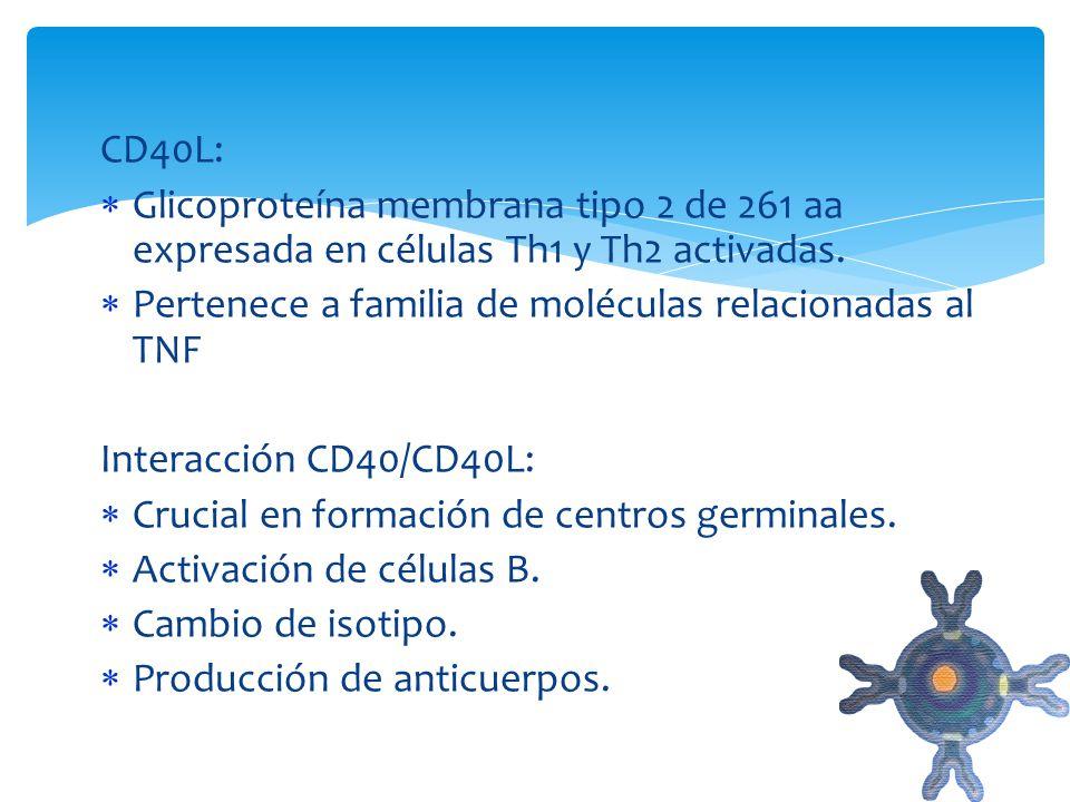 CD40L: Glicoproteína membrana tipo 2 de 261 aa expresada en células Th1 y Th2 activadas. Pertenece a familia de moléculas relacionadas al TNF.