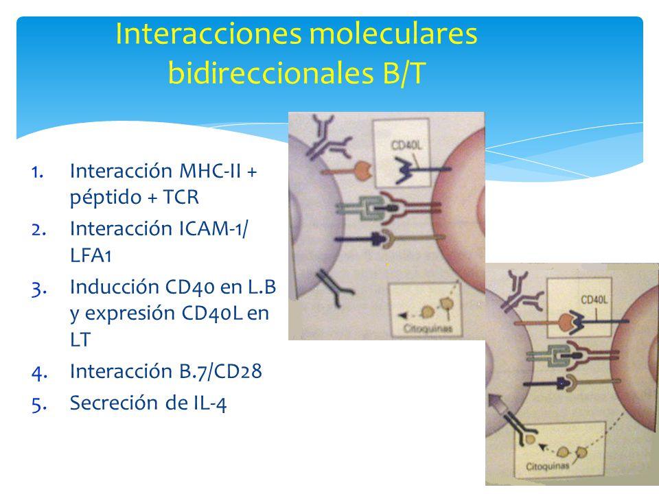 Interacciones moleculares bidireccionales B/T