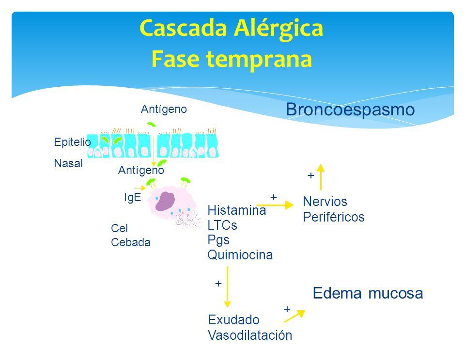 Cascada Alérgica Fase temprana
