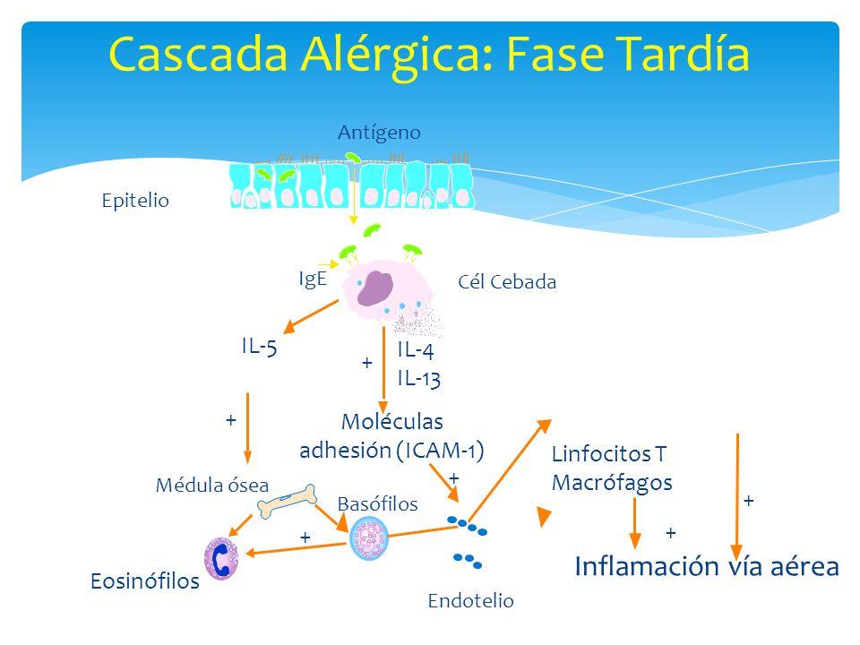 Cascada Alérgica: Fase Tardía