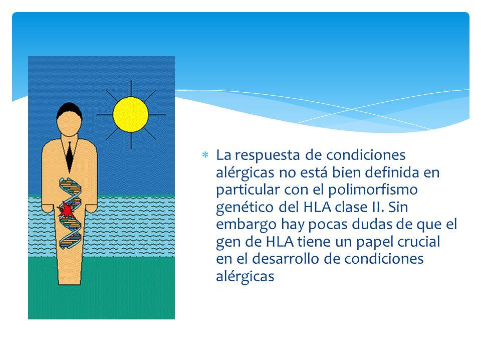 La respuesta de condiciones alérgicas no está bien definida en particular con el polimorfismo genético del HLA clase II.