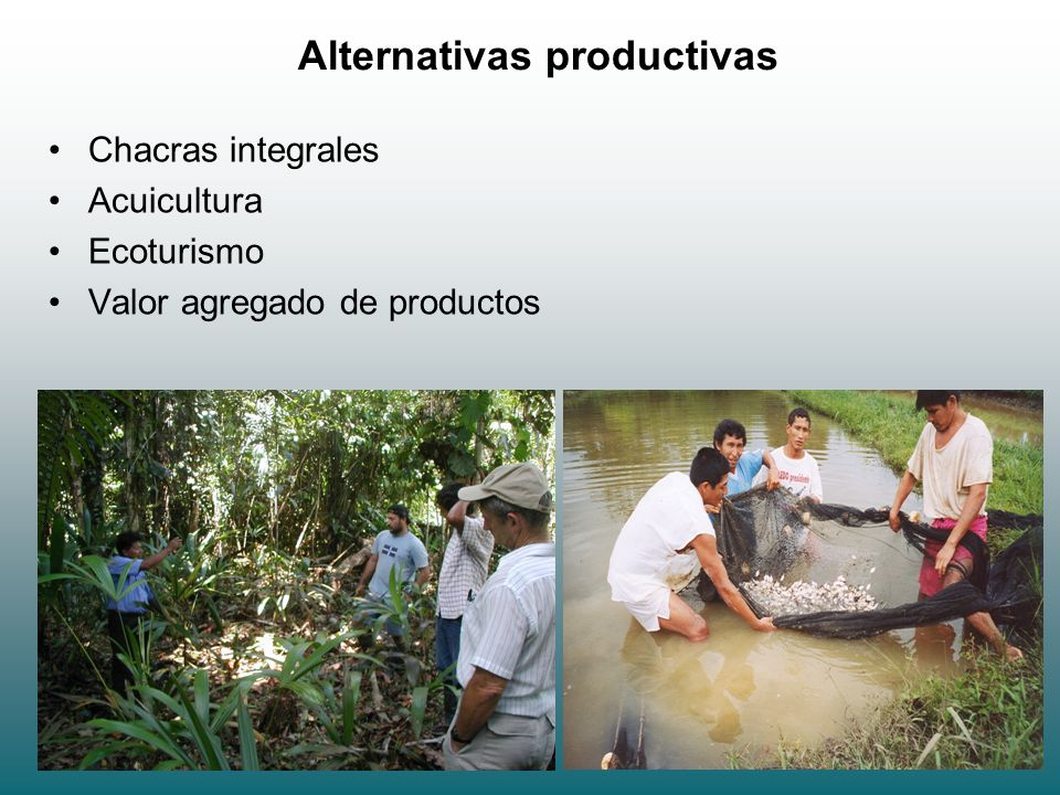 Alternativas productivas