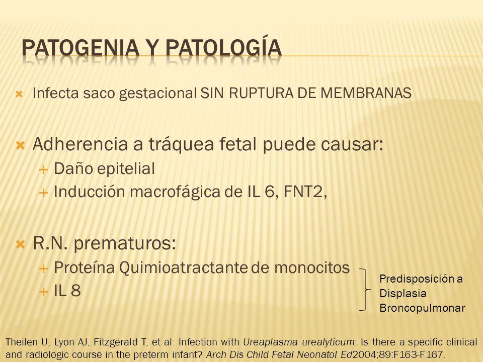 Patogenia y patología Adherencia a tráquea fetal puede causar: