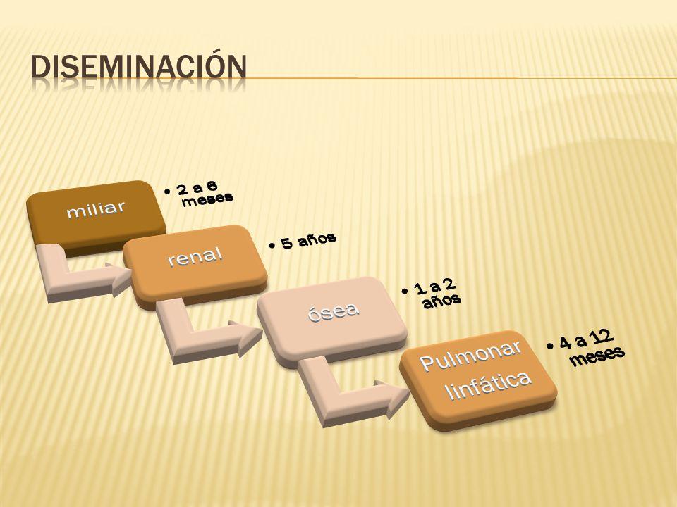 diseminación miliar renal ósea Pulmonar linfática 4 a 12 meses
