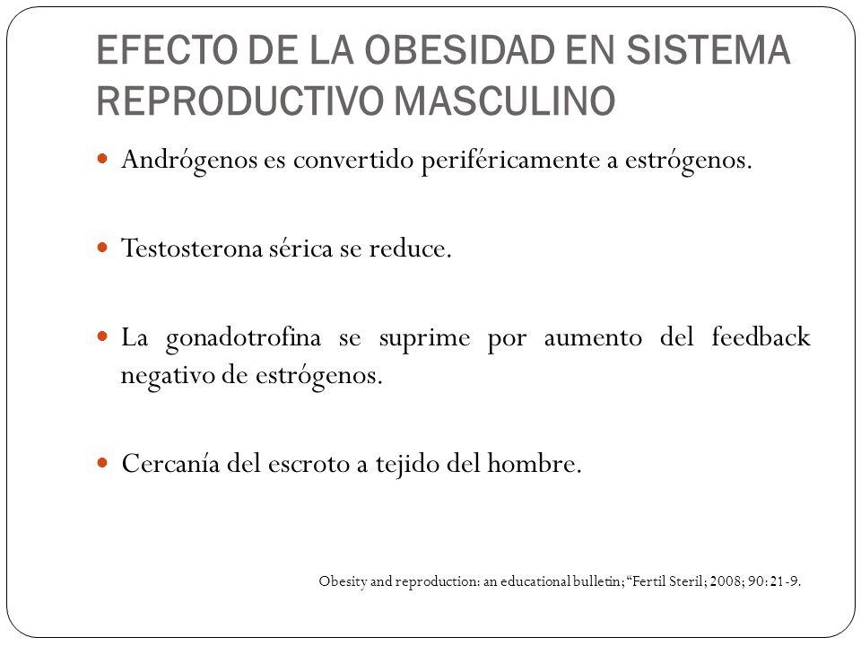 EFECTO DE LA OBESIDAD EN SISTEMA REPRODUCTIVO MASCULINO