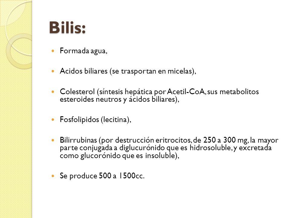 Bilis: Formada agua, Acidos biliares (se trasportan en micelas),