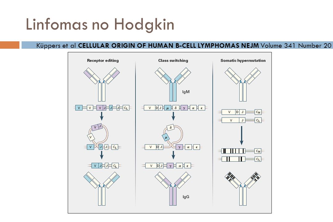 Linfomas no Hodgkin Küppers et al CELLULAR ORIGIN OF HUMAN B-CELL LYMPHOMAS NEJM Volume 341 Number 20.