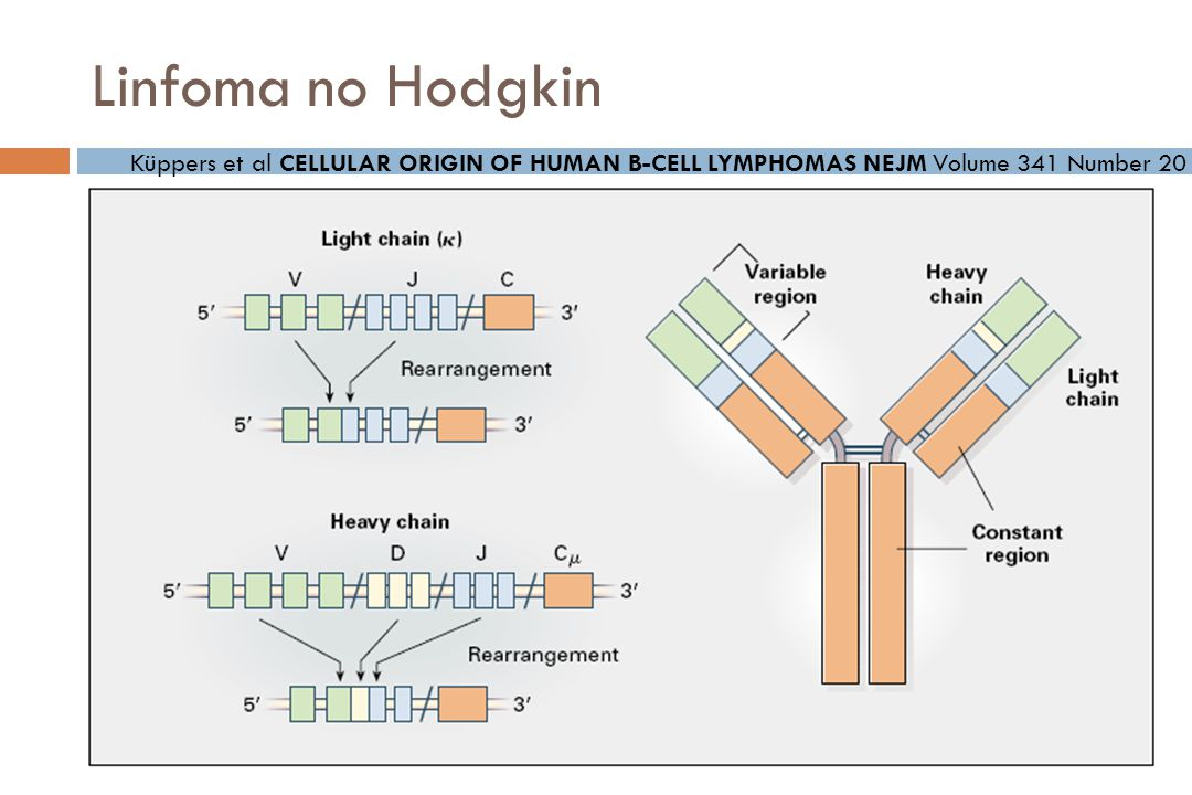 Linfoma no Hodgkin Küppers et al CELLULAR ORIGIN OF HUMAN B-CELL LYMPHOMAS NEJM Volume 341 Number 20.