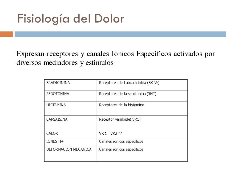 Fisiología del Dolor Expresan receptores y canales Iónicos Específicos activados por diversos mediadores y estímulos.