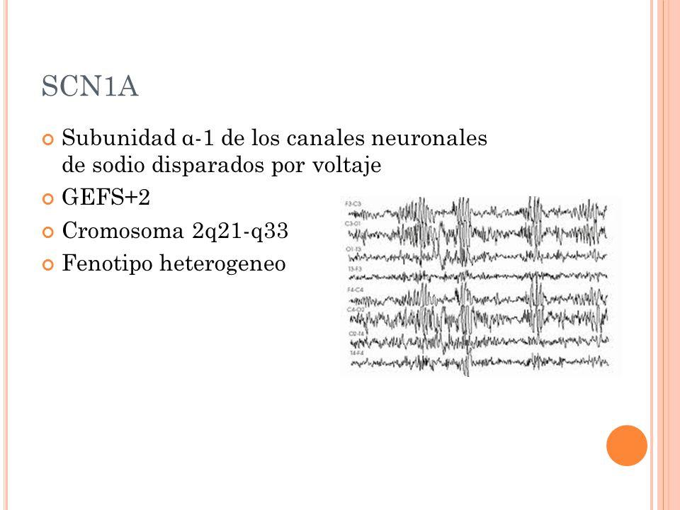 SCN1A Subunidad α-1 de los canales neuronales de sodio disparados por voltaje. GEFS+2. Cromosoma 2q21-q33.