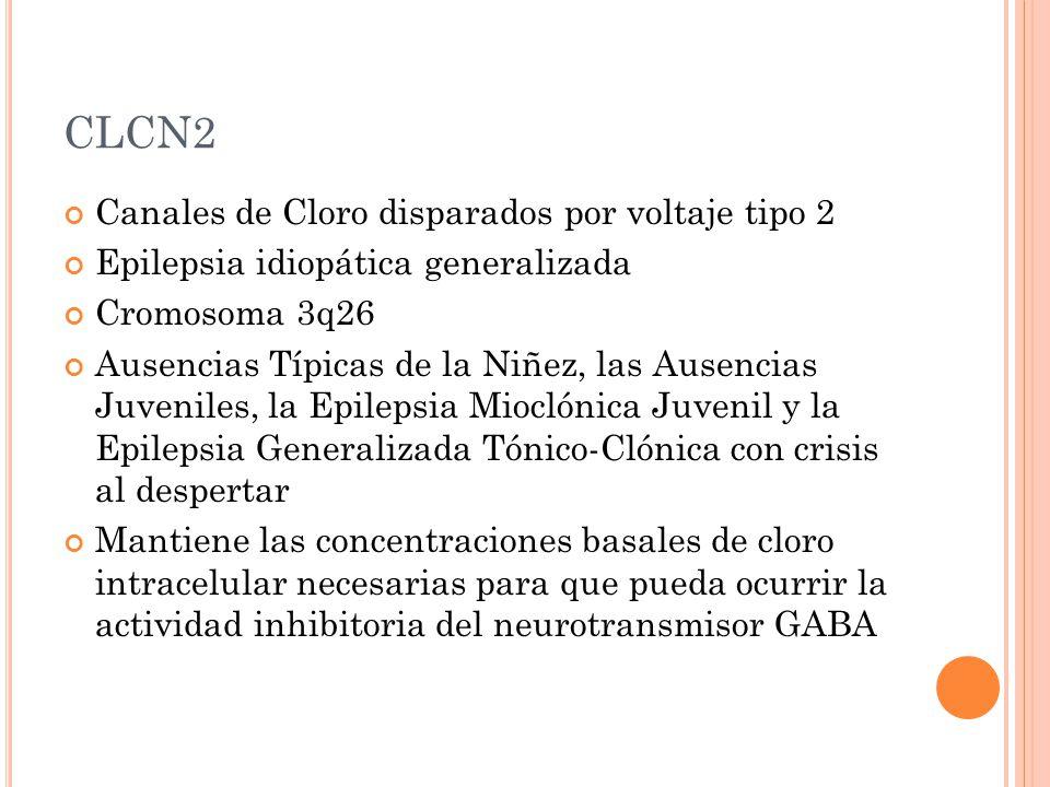 CLCN2 Canales de Cloro disparados por voltaje tipo 2
