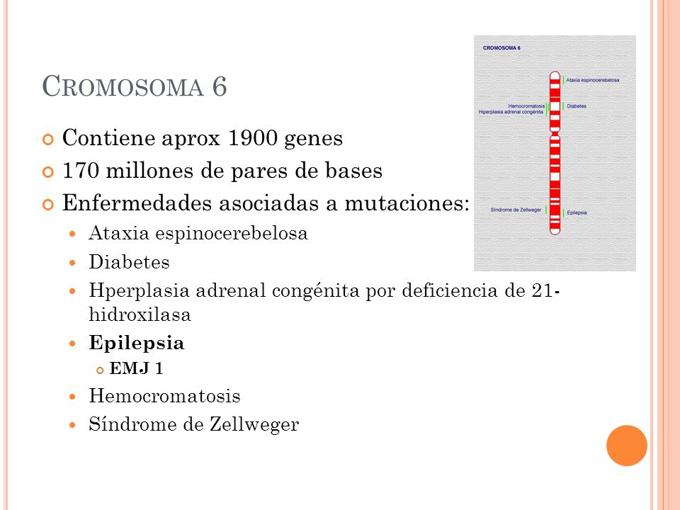 Cromosoma 6 Contiene aprox 1900 genes 170 millones de pares de bases