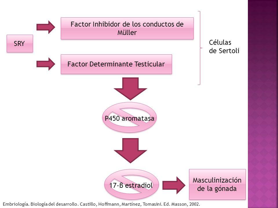 Factor Inhibidor de los conductos de Müller