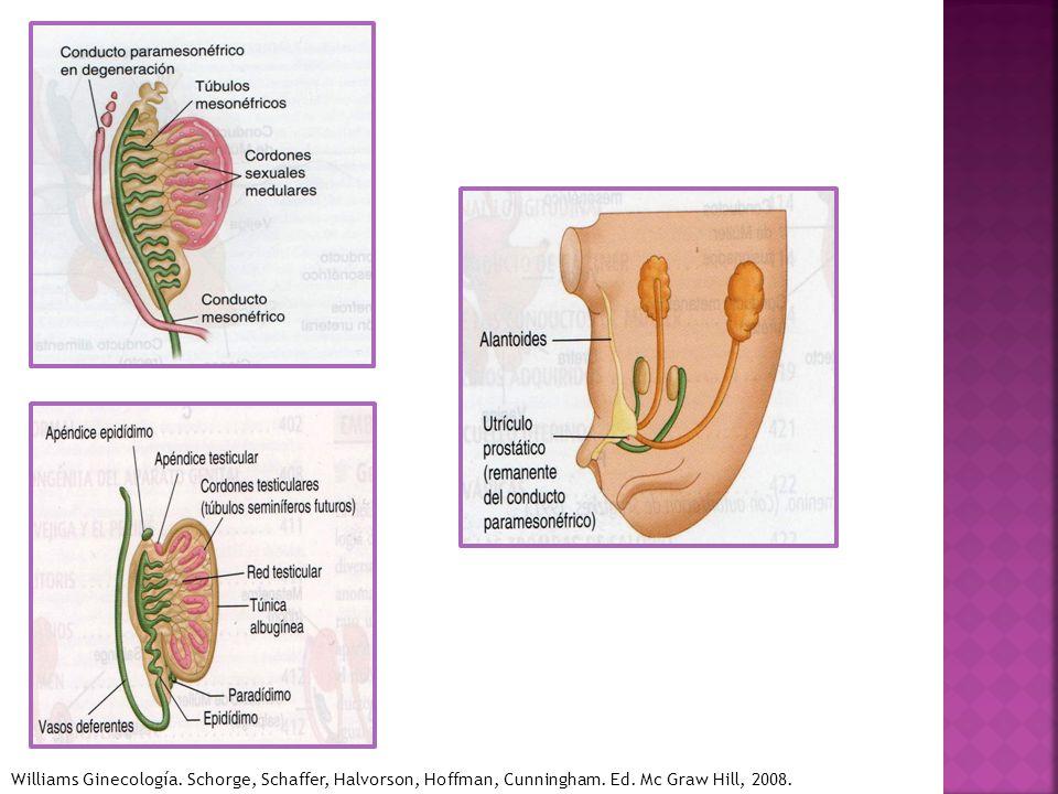 Williams Ginecología. Schorge, Schaffer, Halvorson, Hoffman, Cunningham. Ed. Mc Graw Hill, 2008.