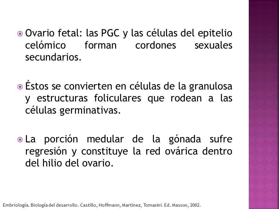 Ovario fetal: las PGC y las células del epitelio celómico forman cordones sexuales secundarios.