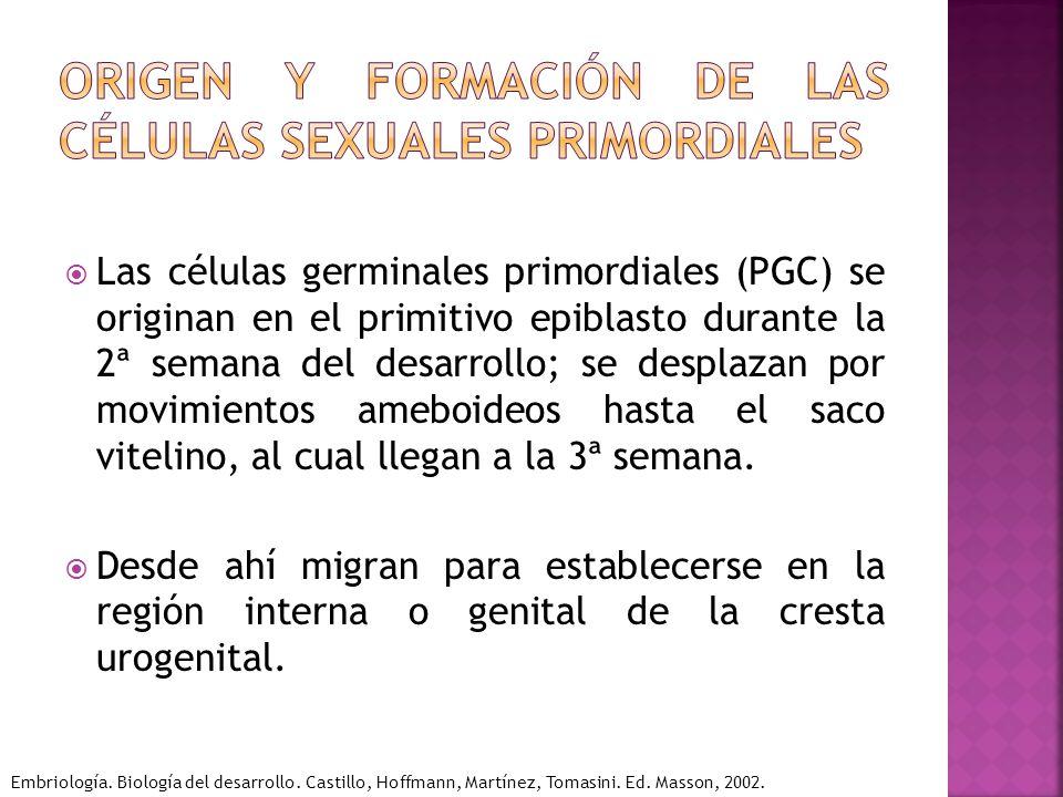 Origen y formación de las células sexuales primordiales