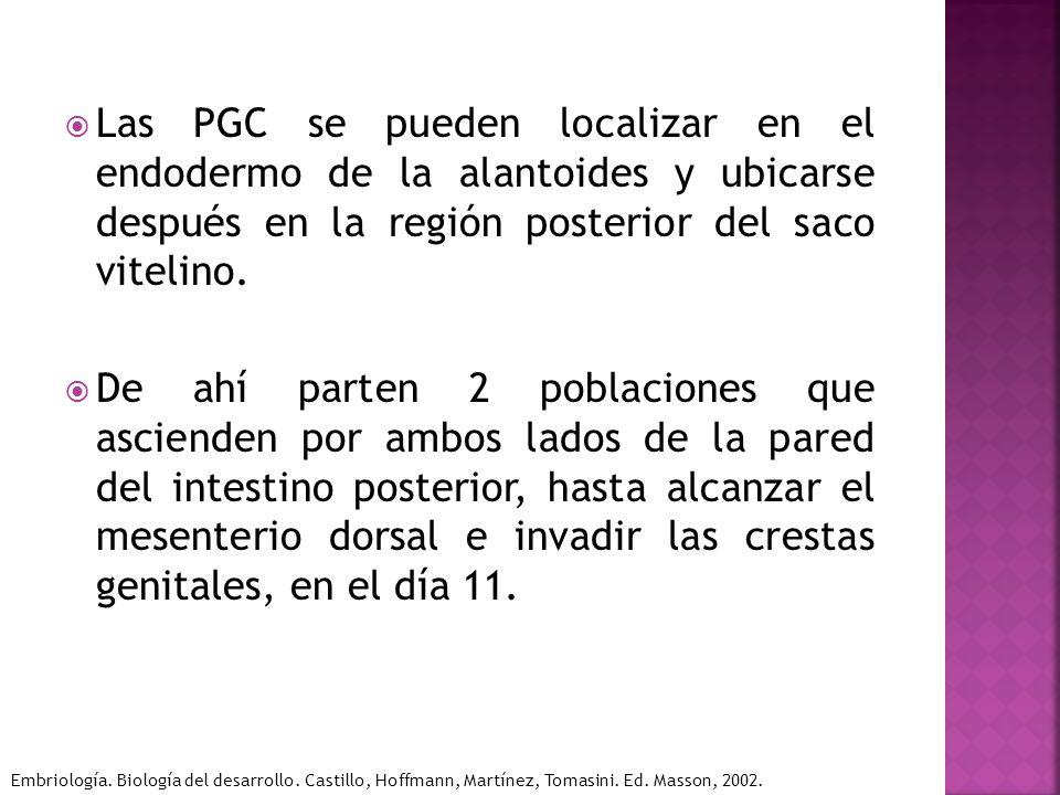 Las PGC se pueden localizar en el endodermo de la alantoides y ubicarse después en la región posterior del saco vitelino.