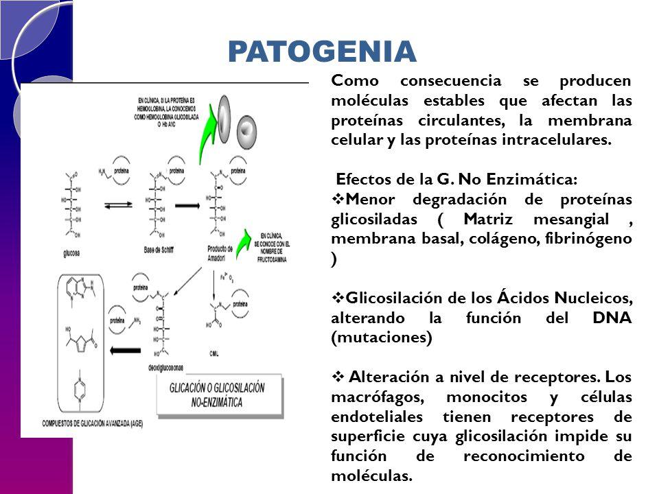 PATOGENIA Como consecuencia se producen moléculas estables que afectan las proteínas circulantes, la membrana celular y las proteínas intracelulares.