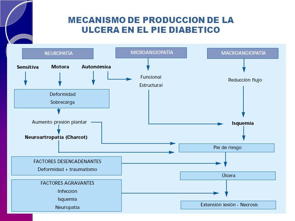 MECANISMO DE PRODUCCION DE LA ULCERA EN EL PIE DIABETICO