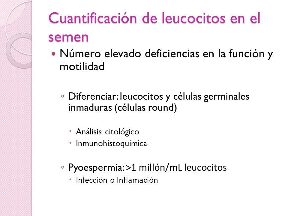 Cuantificación de leucocitos en el semen