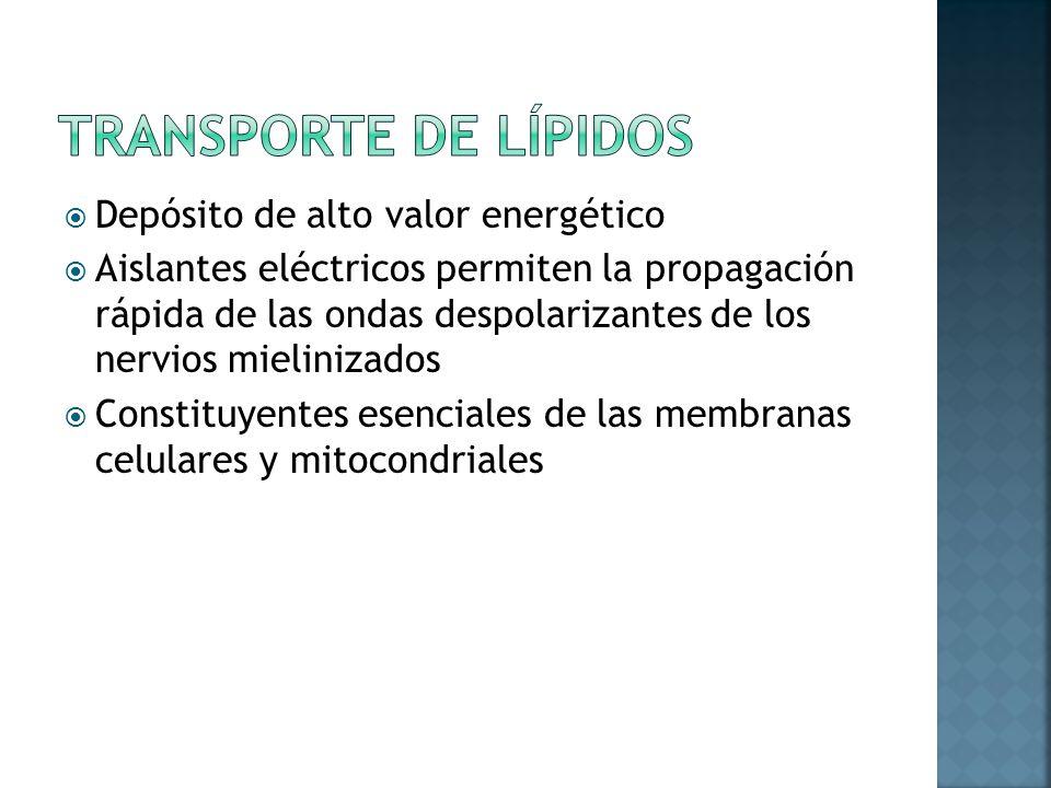 Transporte de Lípidos Depósito de alto valor energético