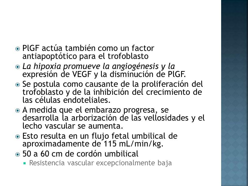 PlGF actúa también como un factor antiapoptótico para el trofoblasto