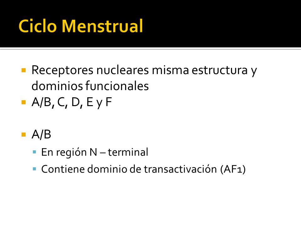 Ciclo Menstrual Receptores nucleares misma estructura y dominios funcionales. A/B, C, D, E y F. A/B.