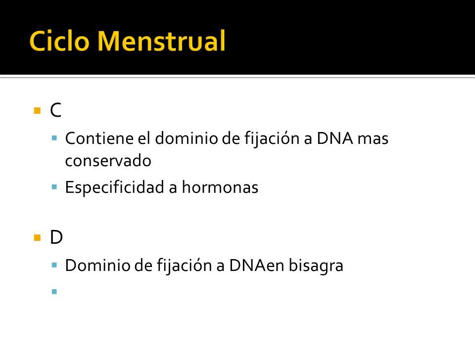Ciclo Menstrual C. Contiene el dominio de fijación a DNA mas conservado. Especificidad a hormonas.