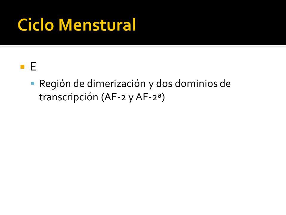 Ciclo Menstural E Región de dimerización y dos dominios de transcripción (AF-2 y AF-2ª)