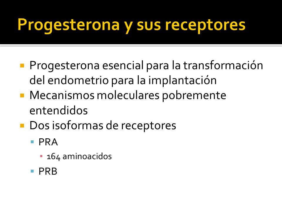 Progesterona y sus receptores