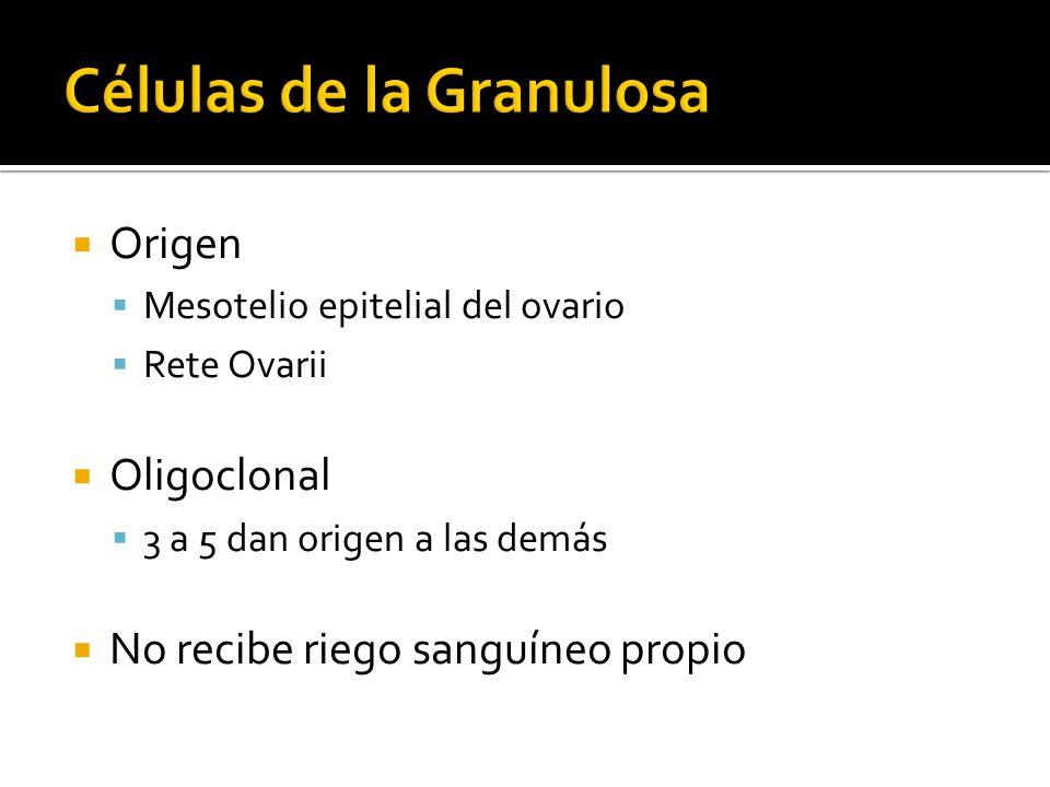 Células de la Granulosa