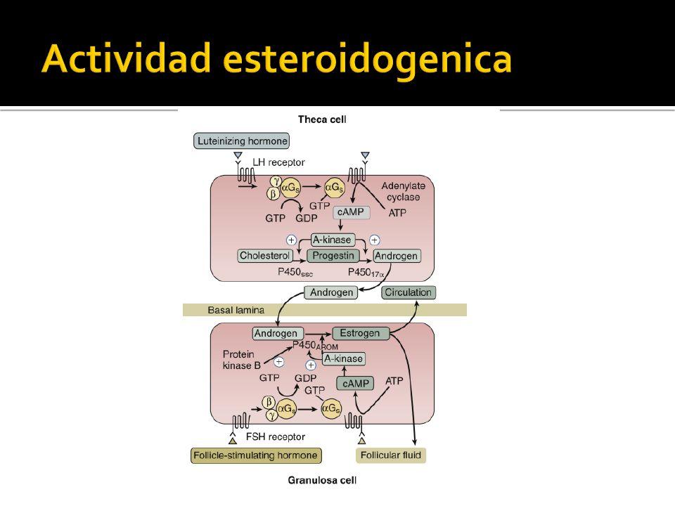 Actividad esteroidogenica