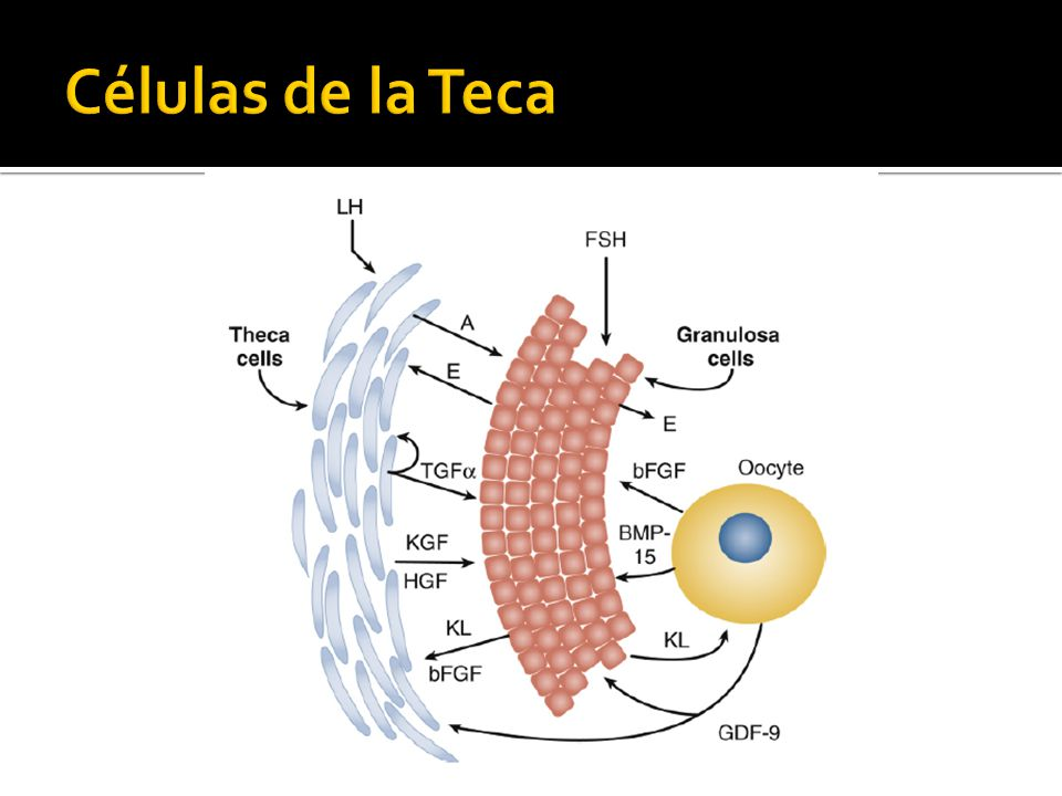 Células de la Teca