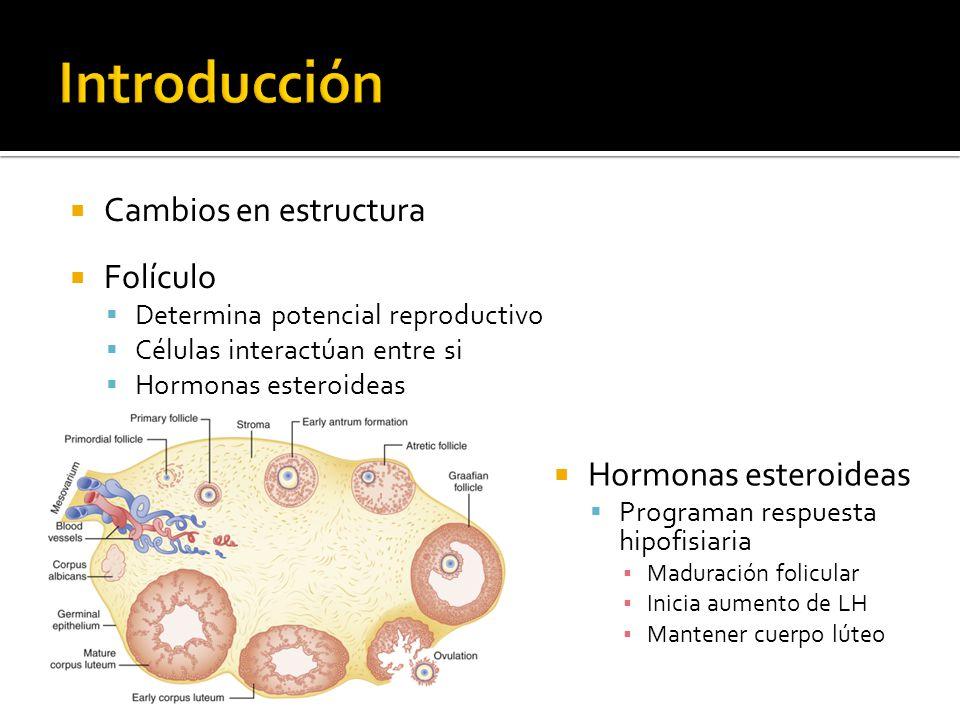Introducción Cambios en estructura Folículo Hormonas esteroideas