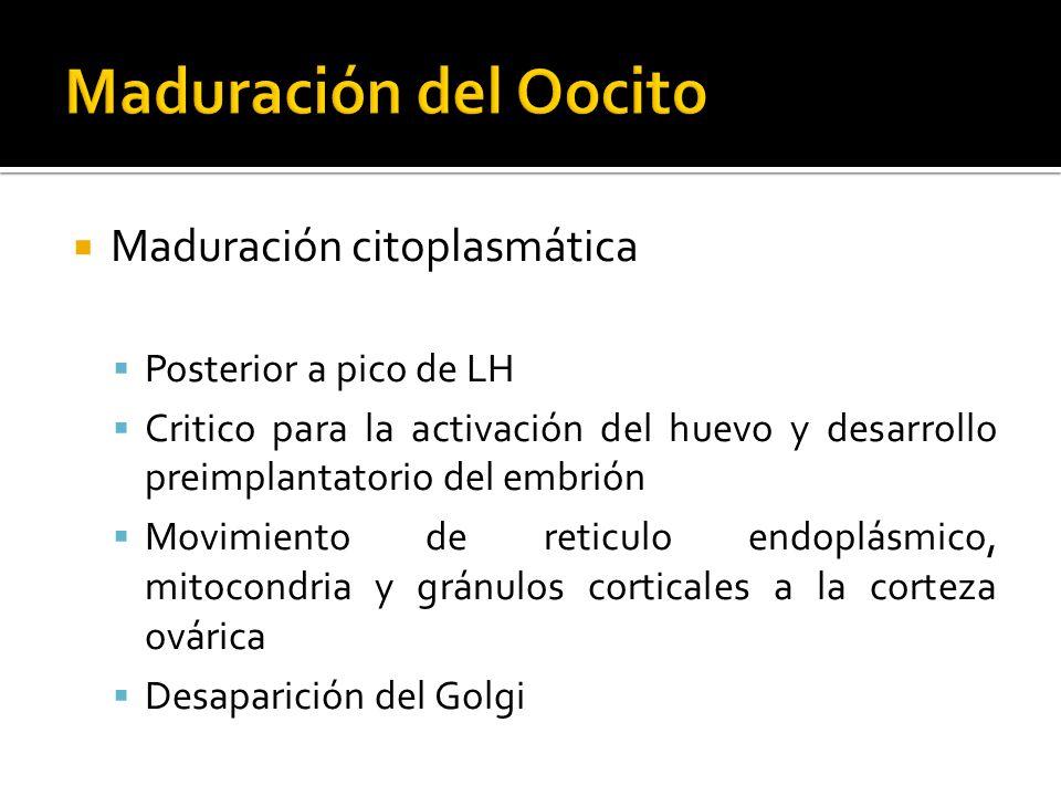Maduración del Oocito Maduración citoplasmática Posterior a pico de LH