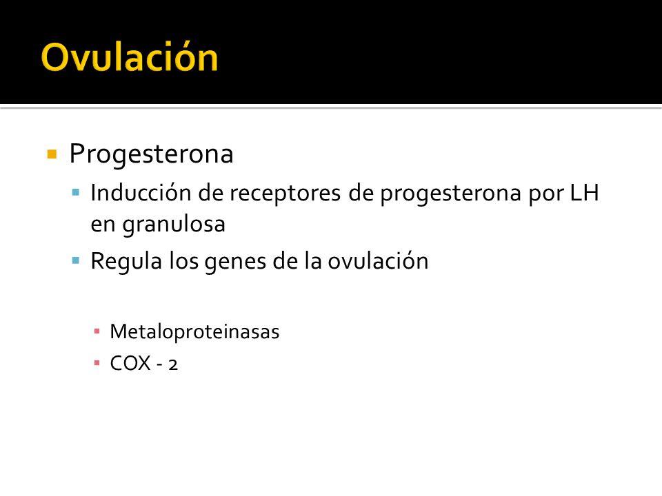 Ovulación Progesterona