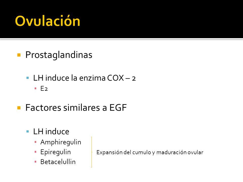 Ovulación Prostaglandinas Factores similares a EGF