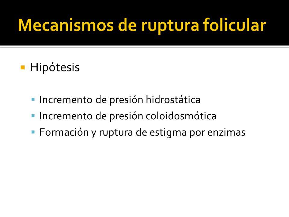 Mecanismos de ruptura folicular