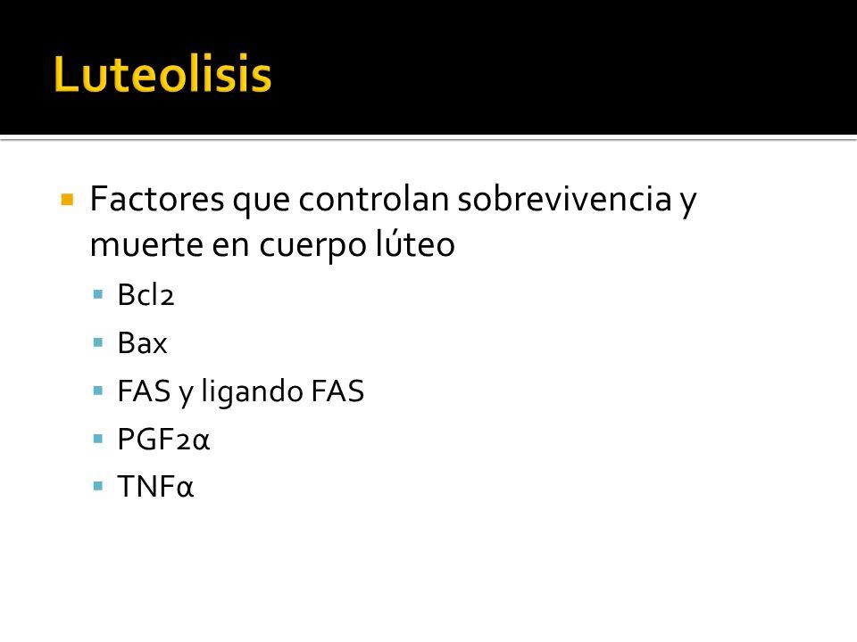 Luteolisis Factores que controlan sobrevivencia y muerte en cuerpo lúteo. Bcl2. Bax. FAS y ligando FAS.
