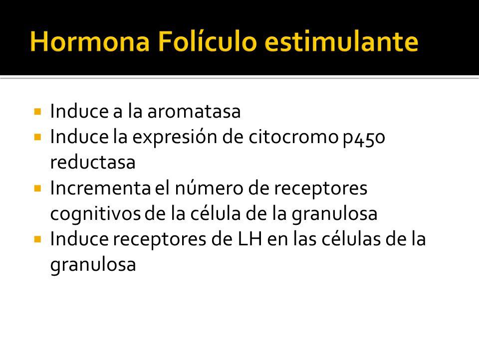 Hormona Folículo estimulante