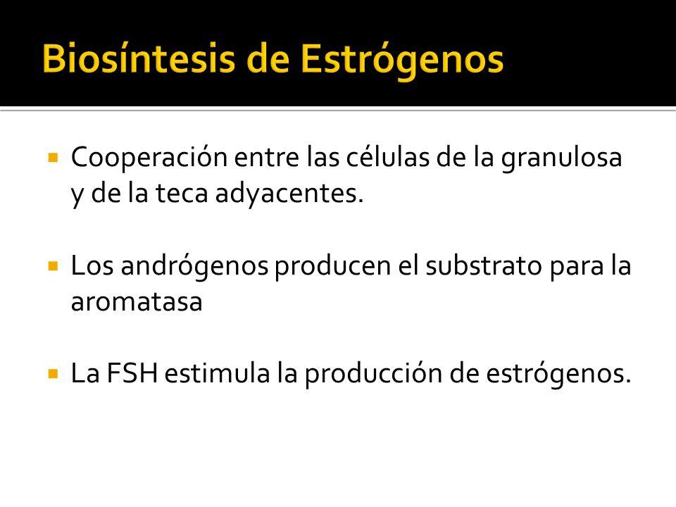 Biosíntesis de Estrógenos