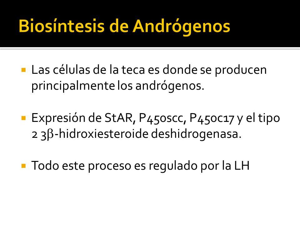 Biosíntesis de Andrógenos