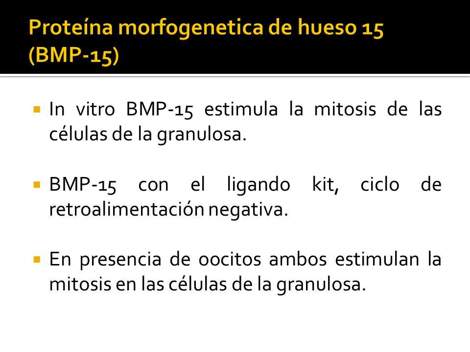 Proteína morfogenetica de hueso 15 (BMP-15)