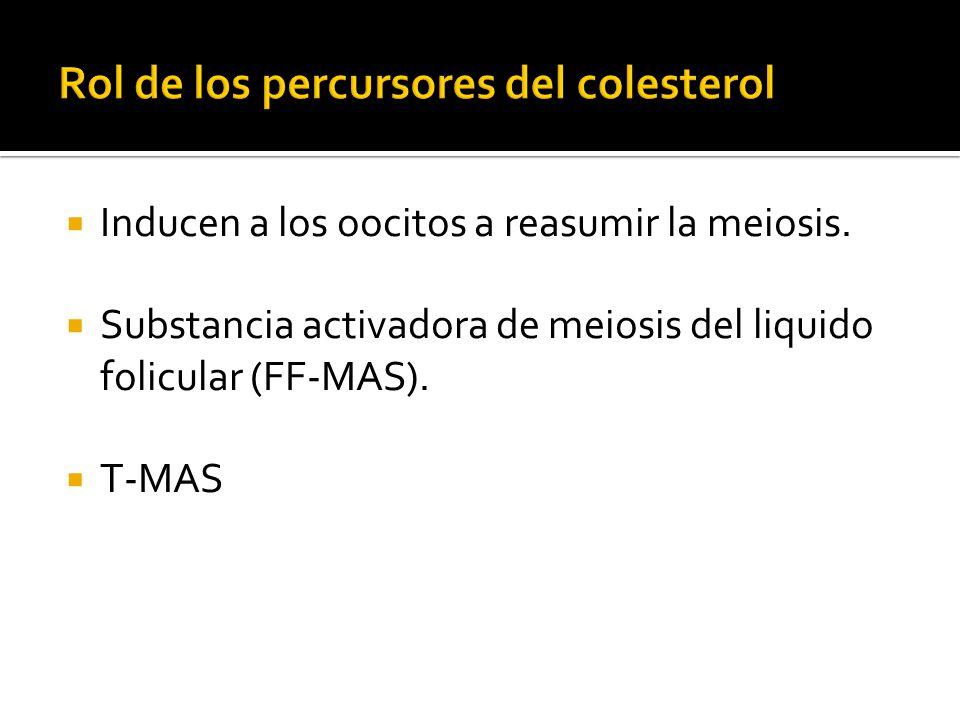 Rol de los percursores del colesterol