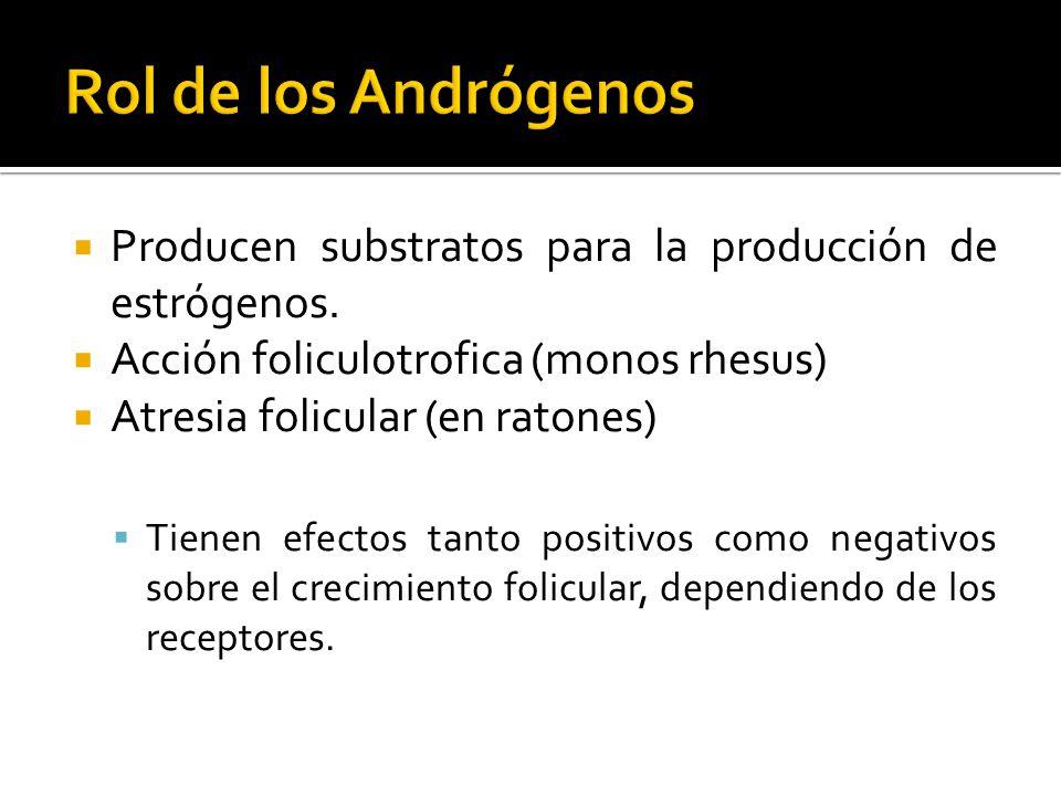 Rol de los Andrógenos Producen substratos para la producción de estrógenos. Acción foliculotrofica (monos rhesus)