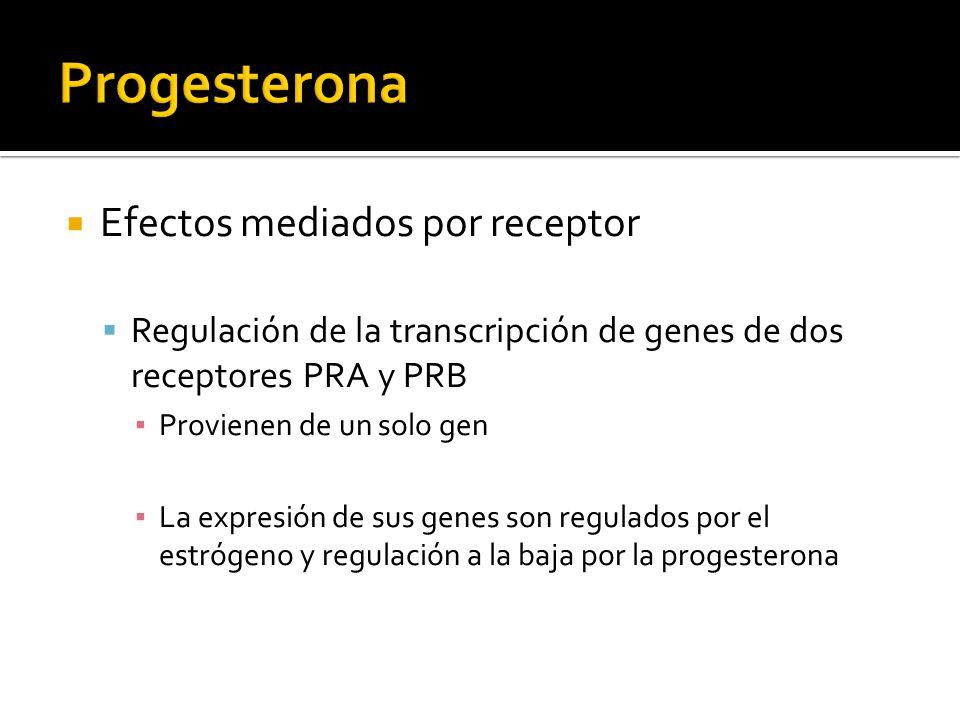Progesterona Efectos mediados por receptor