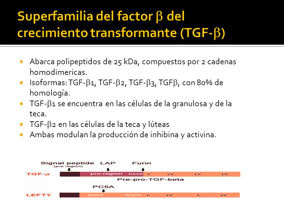 Superfamilia del factor b del crecimiento transformante (TGF-b)